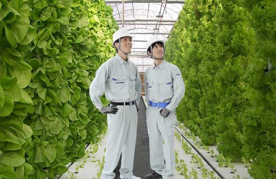 北京爆款植物生长灯厂家诚信经营