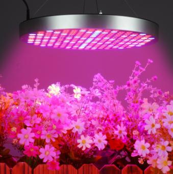 河北跨境电商调光植物灯供应商服务优先