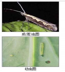 江西果实蝇诱粘剂生产厂,大实蝇引诱剂生产厂家